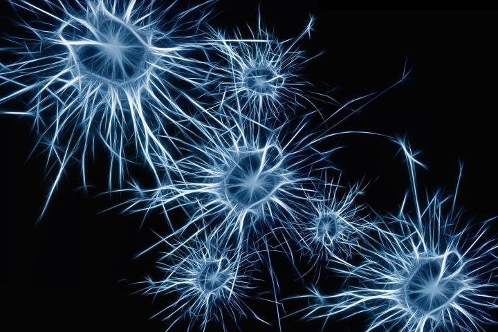 neurons-1773922_1920